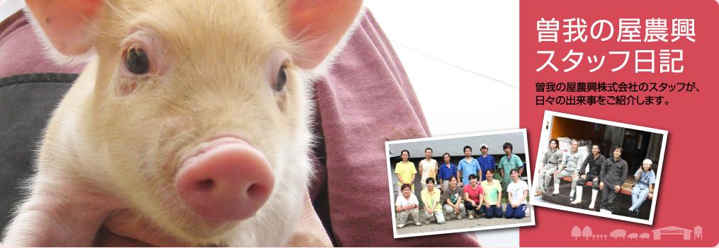 曽我の屋農興スタッフ日記/曽我の屋農興株式会社のスタッフが、日々の出来事をご紹介します。